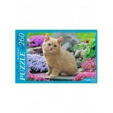 Пазлы 260 эл. Рыжий котенок в цветах