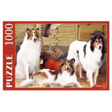 Пазлы 1000 эл. Собаки Колли