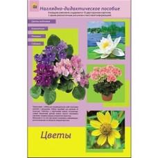 Дидактическое пособие. Цветы комнатные, полевые, садовые, цветы водоемов