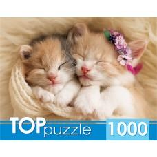 Пазлы 1000 эл. Два спящих котенка TOPpuzzle.
